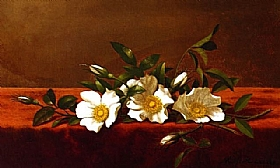 Martin Johnson Heade, Fleurs de rosiers Cherokees - GRANDS PEINTRES / Heade