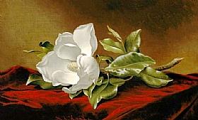Martin Johnson Heade, Magnolia Grandiflora - GRANDS PEINTRES / Heade