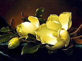 Martin Johnson Heade, magnolias - GRANDS PEINTRES / Heade
