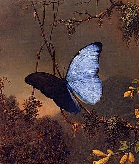 Martin Johnson Heade, Papillon bleu Morpho - GRANDS PEINTRES / Heade