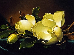magnolias, Martin Johnson Heade - Grands Peintres / Heade