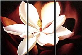 Nature et Flore, La fleur blanche - GRANDS FORMATS /