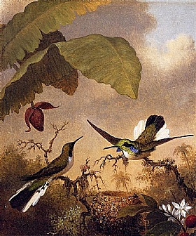 Martin Johnson Heade, Colibris oreillards - GRANDS PEINTRES / Heade