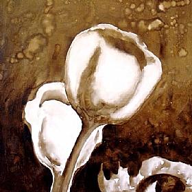 Nature et Flore, fleurs blanches du matin - GRANDS FORMATS / 80cm x 80cm
